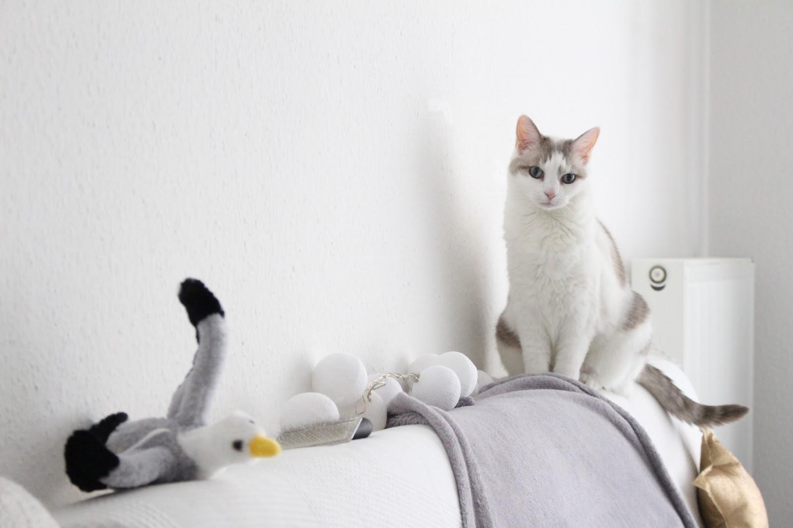Déménager avec son chat : ce qu'il faut faire